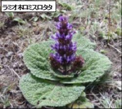 海外の山の花たち写真