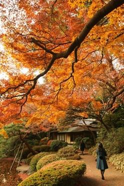 冬紅葉写真