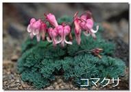 動物の名のついた花々